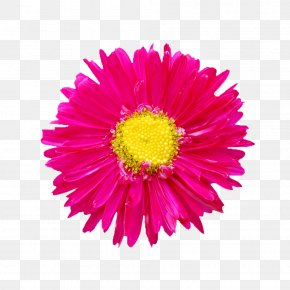 Flowers Picture Abstract Flowers - Cut Flowers Clip Art PNG