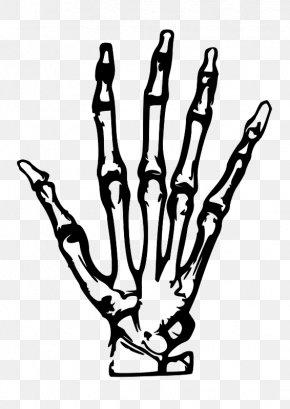 Simple Hand-painted Skeleton Hand - Human Skeleton Hand Bone Clip Art PNG