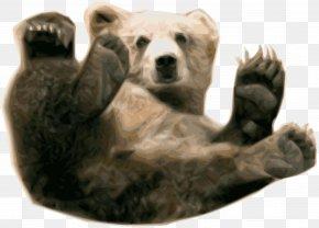 Bear - Polar Bear Brown Bear Grizzly Bear PNG