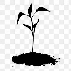 Clip Art Twig Silhouette Plant Stem Flower PNG