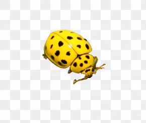 Yellow Ladybug - Beetle Ladybird Clip Art PNG
