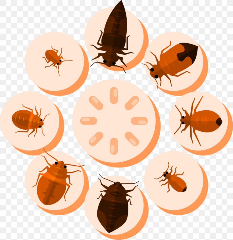Kill Mosquito Killing Mosquito Mosquito Killing Insect, PNG, 1000x1030px, Mosquito, Android, Bed Bug, Coffee Cup, Cup Download Free