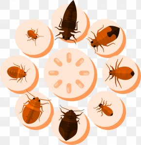 Mosquito Pests - Kill Mosquito Killing Mosquito Mosquito Killing Insect PNG