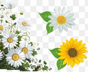 White Chrysanthemum - Common Daisy Flower Picture Frame Stock Photography Clip Art PNG