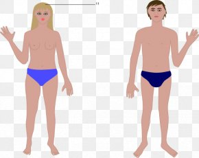 Human Body Cartoon - Human Body Woman Anatomy Clip Art PNG