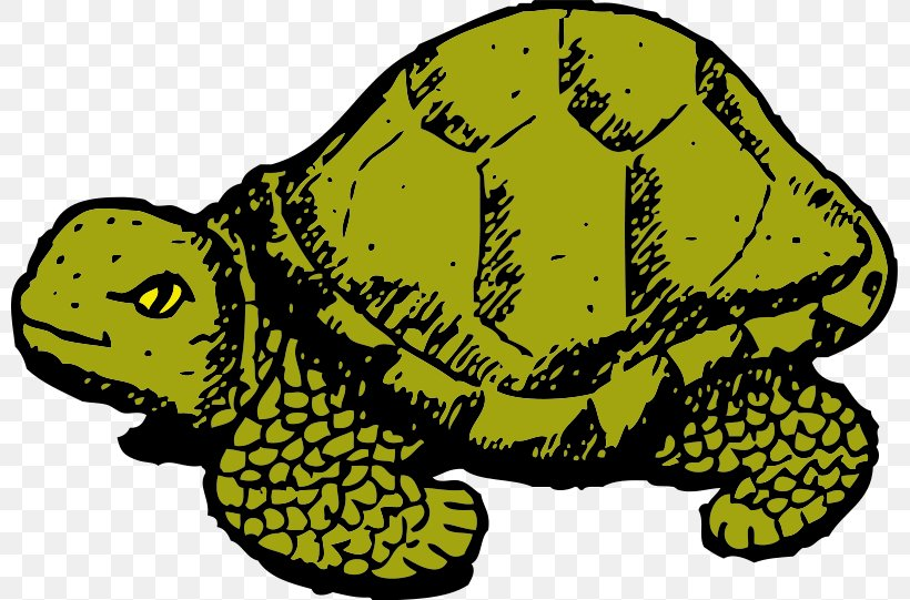 Turtle The Tortoise And The Hare Cartoon Clip Art Png 800x541px