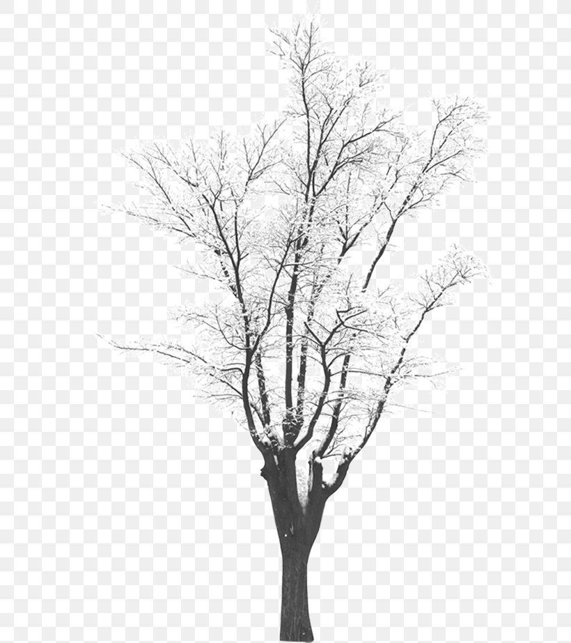 Snow Tree Download, PNG, 605x923px, Tree, Black And White, Branch, Coreldraw, Flower Download Free