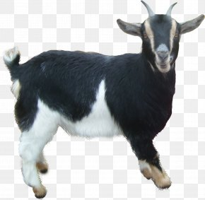 Goat - Goat Sheep PNG