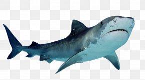 Shark - Papua New Guinea Shark Finning Sand Shark PNG