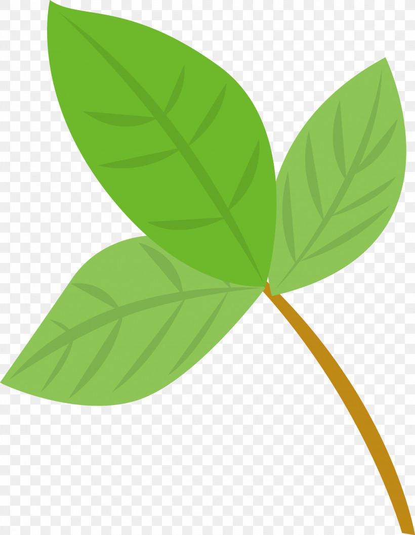 Leaf Green Plant Flower Anthurium, PNG, 2324x3000px, Leaf, Anthurium, Flower, Green, Plant Download Free