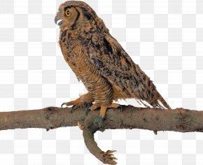 Owl - Owl Bird Clip Art PNG