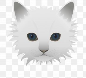 White Kitten - Kitty Cats Kitten PNG