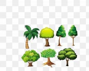 Vector Green Forest Tree Set - Light Tree Euclidean Vector Illustration PNG