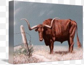Longhorn - Texas Longhorn English Longhorn Calf Paper Printing PNG