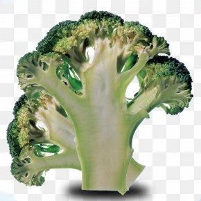 Cauliflower Cut Material - Broccoli Cauliflower Cabbage Vegetable Ingredient PNG