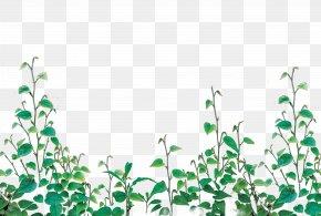 Greenery PNG