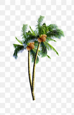 Coconut Tree - Coconut Candy Arecaceae Tree PNG