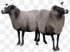 Goat - Sheep–goat Hybrid Cattle Cừu Merino Arles PNG