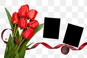 Anthurium Lily Family - Tulip Red Flower Petal Plant PNG