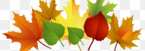 Autumnal Icon - Shareware Treasure Chest: Clip Art Collection Image Free Content PNG