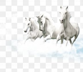 Pegasus Element - Friesian Horse Lipizzan White Ceramic Wallpaper PNG