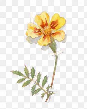 Watercolor Flowers - Flora Cut Flowers Rosaceae Branch Plant Stem PNG