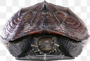 Turtle - Turtle Shell Reptile Green Sea Turtle PNG