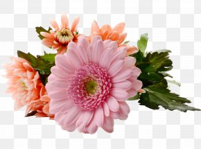 Chrysanthemum Gerbera - Flowering Tea Mothers Day PNG