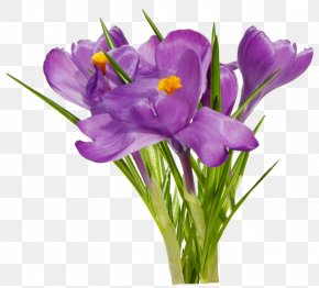 Flower - First Spring Flowers PNG