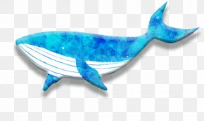 Dolphin - Dolphin Whale PNG
