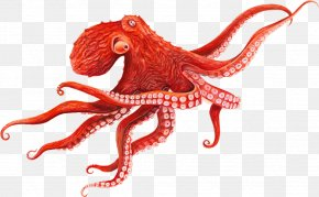 Baby Octopus - Giant Pacific Octopus Cephalopod Squid PNG
