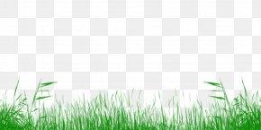 Lawn - Lawn Meadow Grassland Grasses Desktop Wallpaper PNG