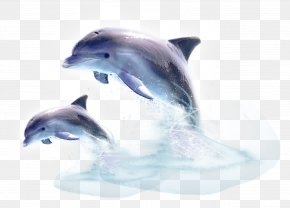 Dolphin - Common Bottlenose Dolphin Short-beaked Common Dolphin Wholphin Tucuxi PNG