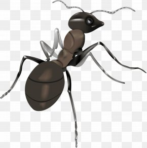 Ant - Ant Illustration PNG