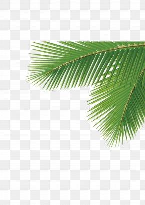 Corner Palm Trees - Arecaceae Leaf Tree Dasylirion Wheeleri PNG
