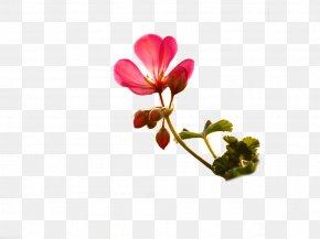 Flower - Flower Bouquet Floristry Floral Design Petal PNG
