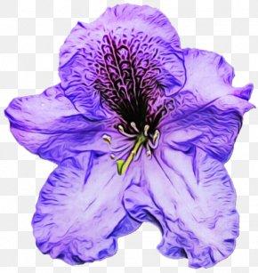 Cut Flowers Petunia - Lavender PNG