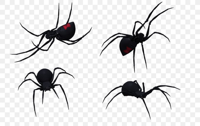 Spider Southern Black Widow Latrodectus Hesperus Drawing