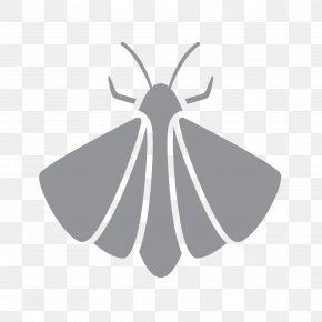1st Pest Control - Moth Brush-footed Butterflies Pest Control Lower Mainland PNG