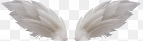 White Wings - Wing Clip Art PNG