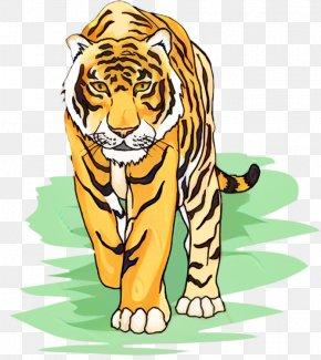 Tiger Lion Clip Art Whiskers Illustration PNG