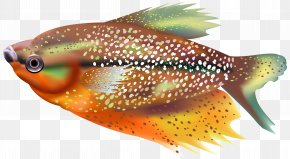 Orange Fish Transparent Clip Art Image - Fish Clip Art PNG