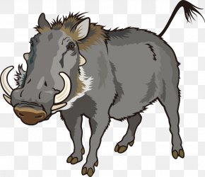 Vector Wild Boar - Common Warthog Can Stock Photo Clip Art PNG