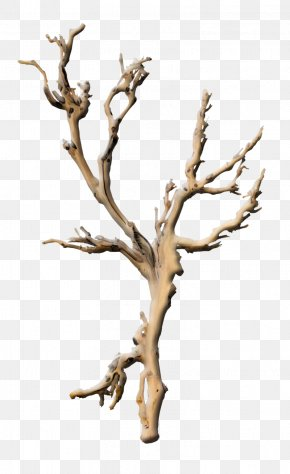 Tree Branches - Branch Tree Plant Root Twig PNG