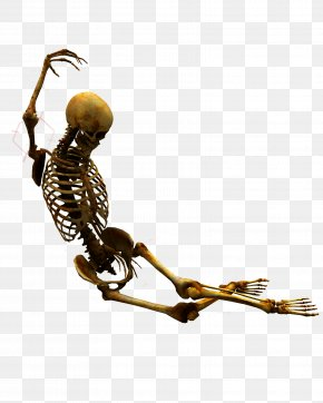 Women Bone Human SkeletonSkeleton - Skeleton At The 2018 Winter Olympics PNG