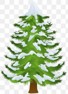 Winter Trees Cliparts - Pine Tree Winter Fir Clip Art PNG