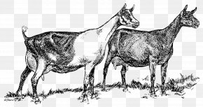 Goat - Cattle Alpine Goat Saanen Goat Angora Goat Livestock PNG