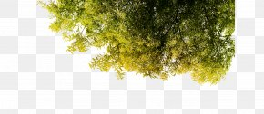 Green Tree Creative - Green Tree Poster Wallpaper PNG
