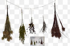 Herbs - Herb DeviantArt Food Drying Digital Art PNG