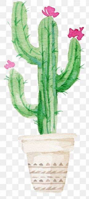 Sen Department Aesthetic Cactus - Cactaceae Succulent Plant Watercolor Painting Printmaking PNG